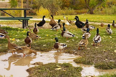 At least the ducks like rainy days