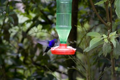 Hummingbird at Monteverde
