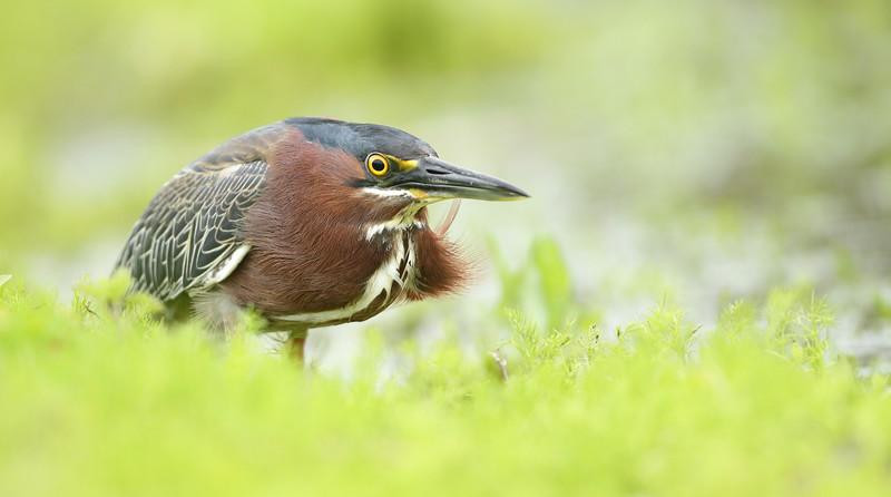 IMAGE: https://photos.smugmug.com/Other/Birds/i-psRszHs/0/dbac244f/L/2446-L.jpg