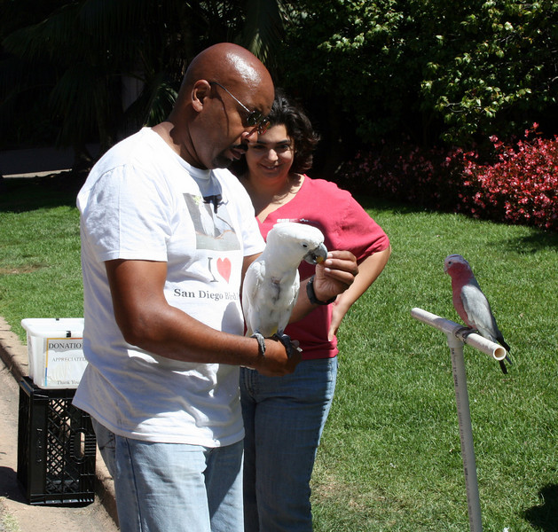 Cockatoo<br /> Balboa Park<br /> 5 Sep 2010
