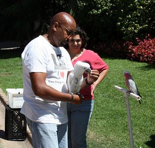Cockatoo Balboa Park 5 Sep 2010