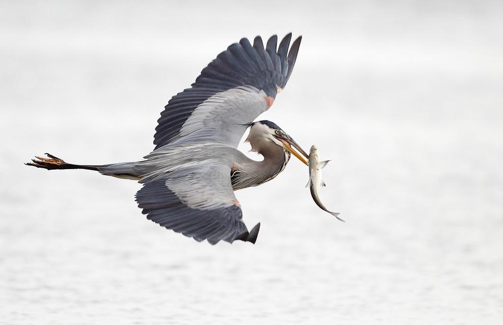 IMAGE: http://www.mikeswildlife.com/Other/Birds/i-rCDpf5z/0/XL/146-XL.jpg