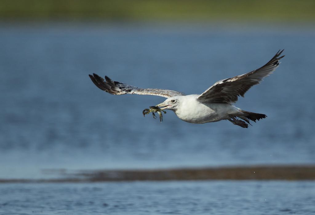 IMAGE: http://www.mikeswildlife.com/Other/Birds/i-sWJ5PpF/0/XL/139-XL.jpg