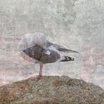 Gull #3