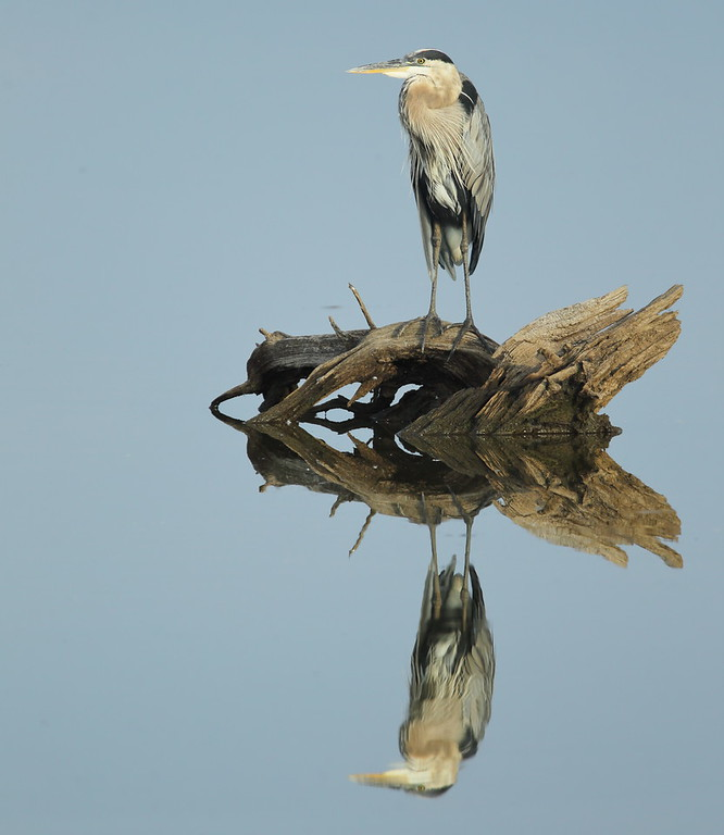IMAGE: https://photos.smugmug.com/Other/Birds/i-wb4ZLXT/0/9890ad0b/XL/BB8I5029-XL.jpg