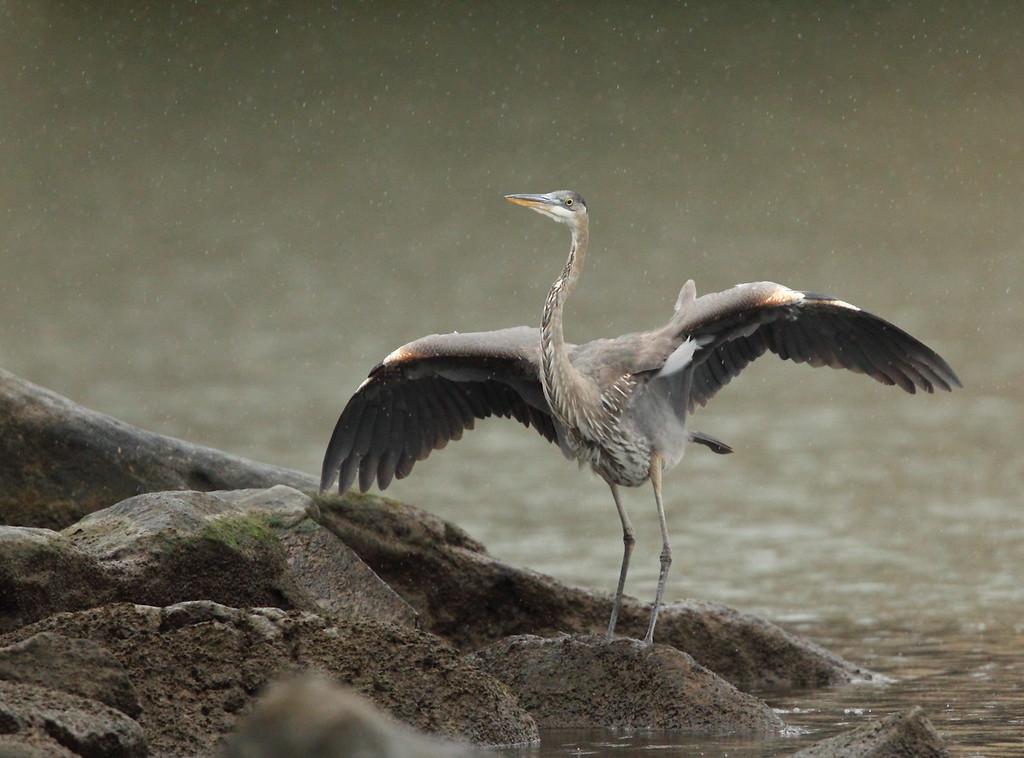 IMAGE: https://photos.smugmug.com/Other/Birds/i-wgtLXnC/0/XL/122-XL.jpg