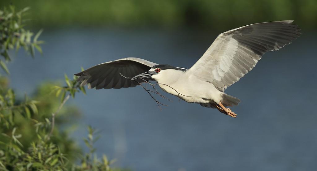 IMAGE: http://www.mikeswildlife.com/Other/Birds/i-z4rCjbm/0/XL/781-XL.jpg