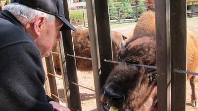 Bison Test