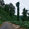 Kudzu National Monument