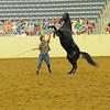 Black Stallion KHP 5-11-2011 :