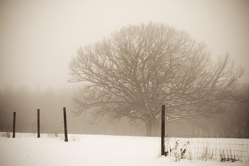 Winter at Moose Hill