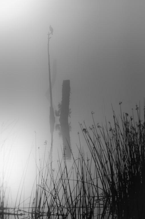 Viera Wetlands at Dawn I
