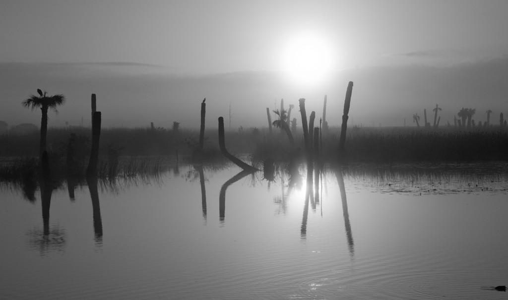 Viera Wetlands II