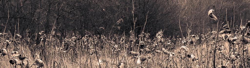 Pod Field