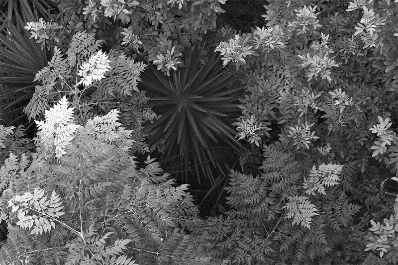 Bermudian Flora