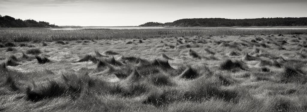The Waves at Wellfleet