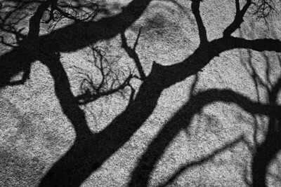 Tree Shadows on Rock, Joshua Tree
