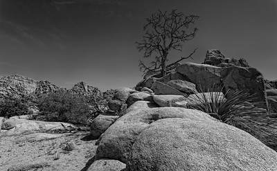 Smuggler's Canyon, Joshua Tree