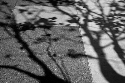 Shadow of Trees on Sidewalk, San Francisco After school let out, I went to the Pervasive conference in San Fransicso and then HCIC in Pacific Grove