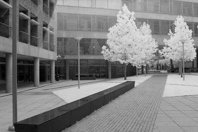 Bauer-Fairchild Courtyard