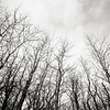 Trees without leaves looking up at the sky with a wide angle lens in winter
