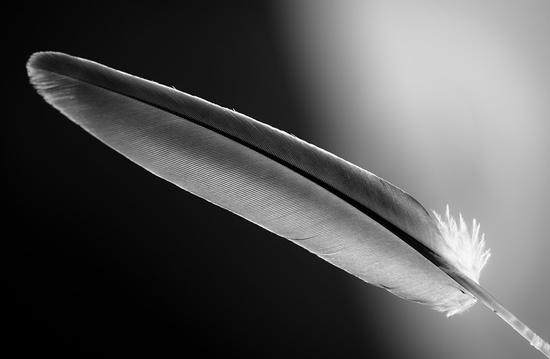 Feather D
