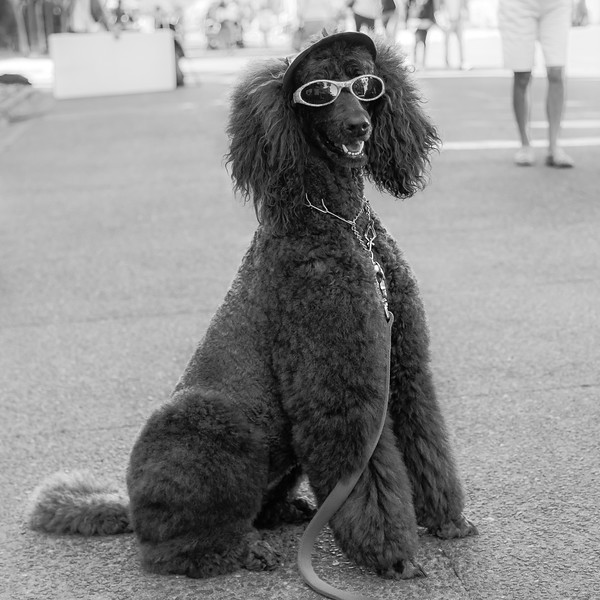 Doggone Cool