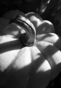 Pumpkin Shadow