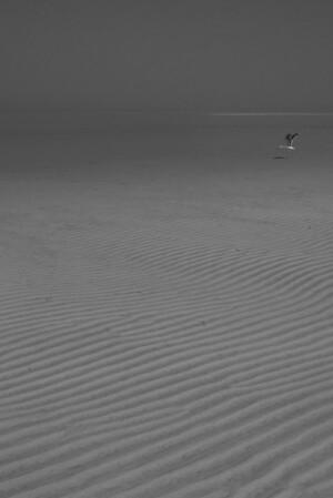 Gull, low tide