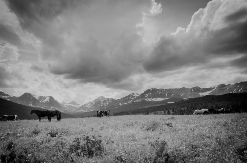 Open Range<br /> Glacier National Park
