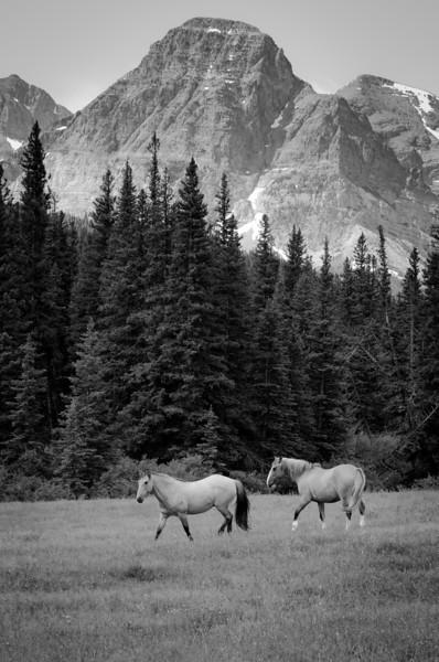 Running Free<br /> Glacier National Park
