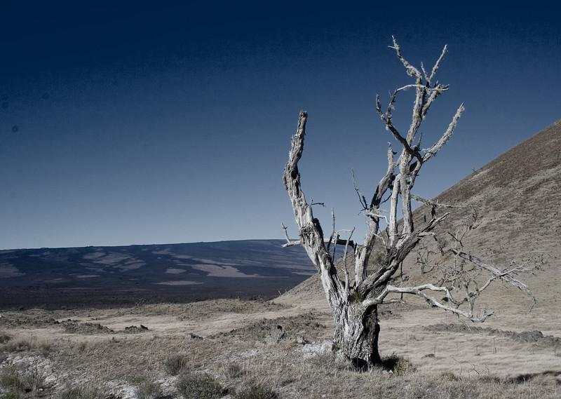Saddle Road Tree III