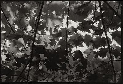 """Maple Shadows"" Schmeeckle Reserve, Wisconsin, USA"
