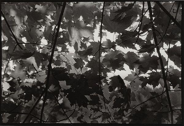 """Maple Shadows""<br /> Schmeeckle Reserve, Wisconsin, USA"