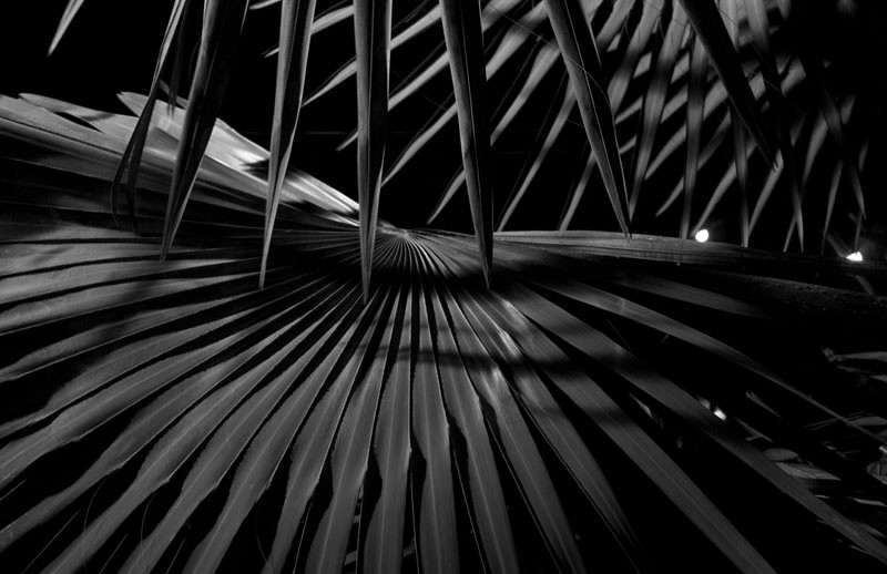 Palm Fronds at Night