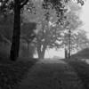 Fog, Ft Sewell Park Marblehead