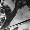 Treeflection