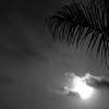 Sun & Palm Branch