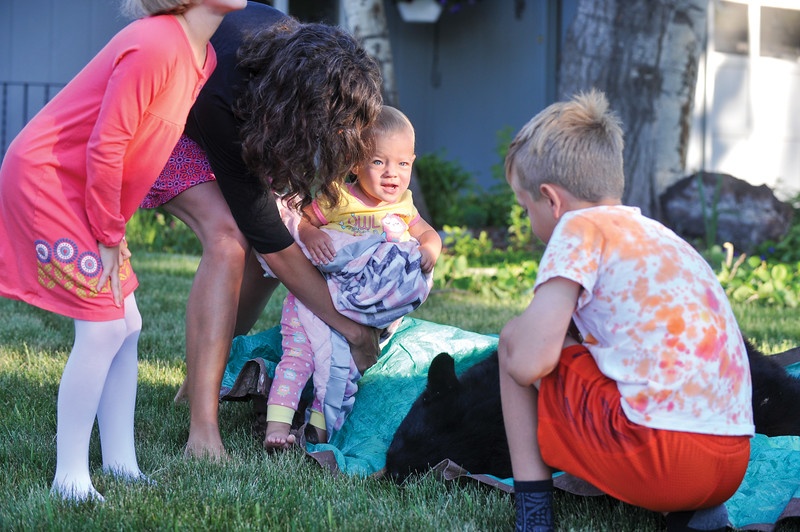 Ashleigh Fox | The Sheridan Press<br /> Charlotte Lansing, center, reacts to petting a tranquilized black bear Friday, May 25, 2018. Pictured from left, Elizabeth Lansing, Mary Lansing, Charlotte and Aaron Lansing. A black bear showed up in the Lansing's front yard Thursday night and was tranquilized by Wyoming Game and Fish Department wardens Friday morning.