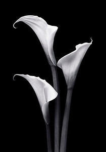"""Callas"" Simplicity itself, yet the epitome of elegance"