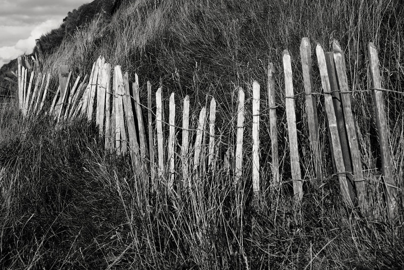 A series of sun-bleached, weather-beaten wood picket slats form an uneven fence acting as a wind barrier on a grassy Scottish hill in Holyrood Park in Edinburgh. They remind me of a series of old bones sticking out of the hill. In black and white.