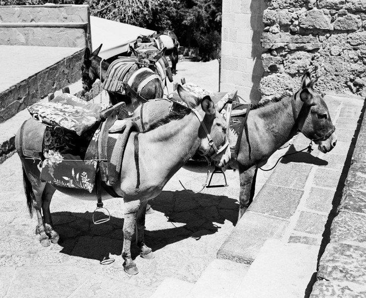 A group of donkeys waiting to carry tourists up a hill in the town of Lindos on the island of Rhodes in Greece. (Scanned from black and white film.)