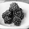 Blackberries still life shoot