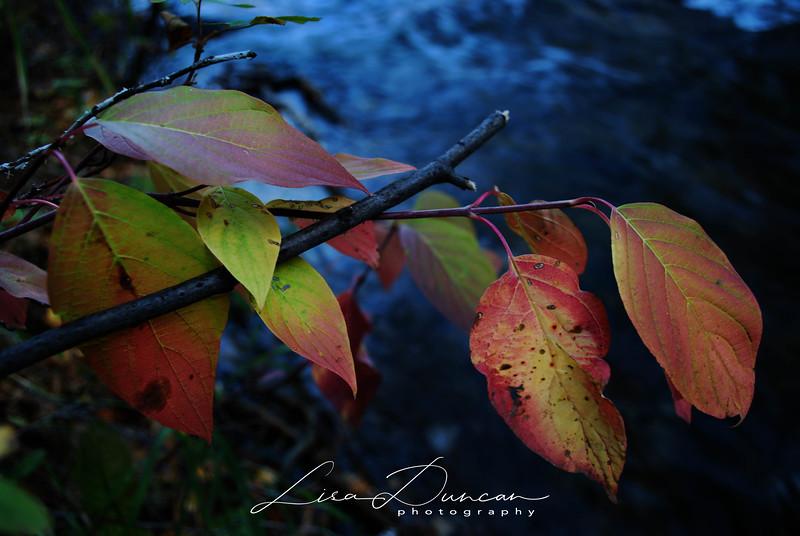 Rapid Creek<br /> November, 2011