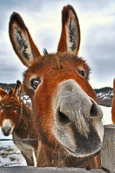DT Donkey<br /> November, 2010