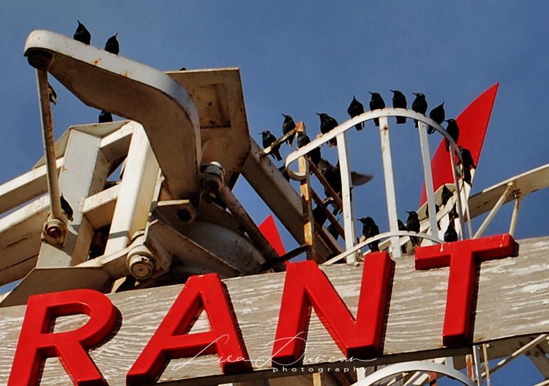 RANT<br /> December 2011