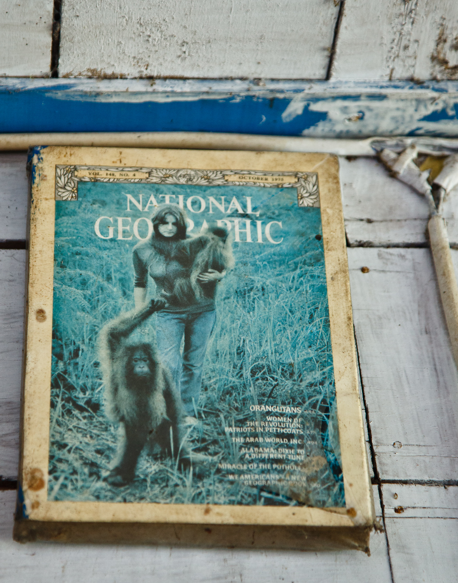 Galdikas as a young woman on the cover of National Geographic.
