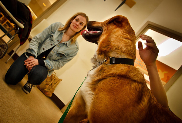 A woman is interviewed by THS adoption staff with the prospective adoptee taking part.  Considerable effort is made to ensure a good fit between pet and adoptive parent, flagging any health or behavioral concerns, to reduce that chance of the animal being returned to the shelter.