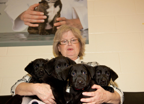 Beverly, a volunteer foster parent, returns four puppies to the Toronto Humane Society now that they are old enough for adoption.  Orphaned at two weeks old, the puppies required bottle feeding and weaning, regular veterinary check-ups, and lots of attention over the six weeks that they shared Beverley's home.
