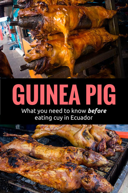 How to eat cuy - Guinea Pig in Ecuador and Peru. Eating guinea pig is a delicacy in South America but you need to know where to eat cuy and what to expect. In this post I also share a video where I eat guinea pig with my hands.